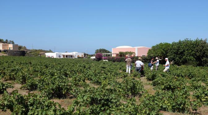 La Vite ad Alberello di Pantelleria è Patrimonio dell'Unesco