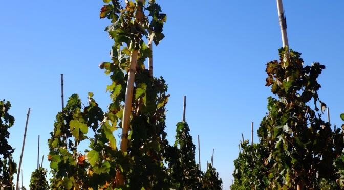Dieci etichette de I Vigneri, l'11 marzo una degustazione da non perdere a Palermo