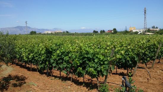 Sei vini della Fattoria Augustali, sei etichette alla scoperta della Doc Alcamo