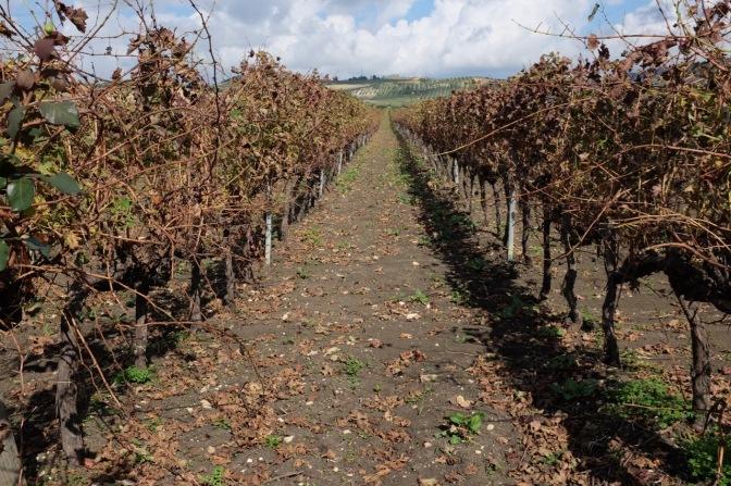 Come imparare a riconoscere il vino? Ve lo spiega direttamente la Cantina Fazio